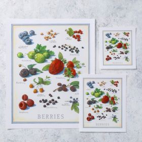 Cook's Illustrated Unframed Print: Berries