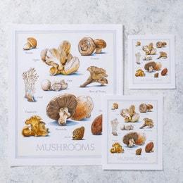 Cook's Illustrated Unframed Print: Mushrooms