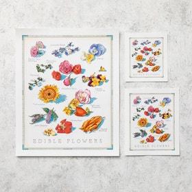 Cooks Illustrated Unframed Print: Edible Flowers