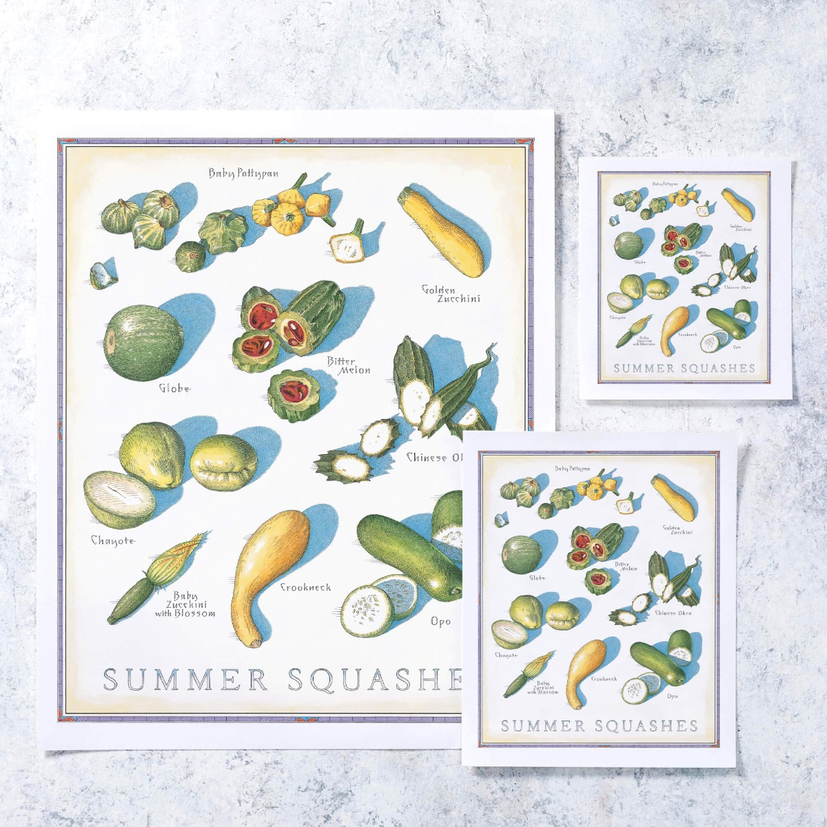 Cook's Illustrated Unframed Print: Summer Squashes