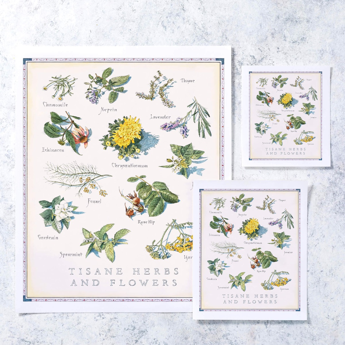 Cook's Illustrated Unframed Print: Tisane Herbs and Flowers