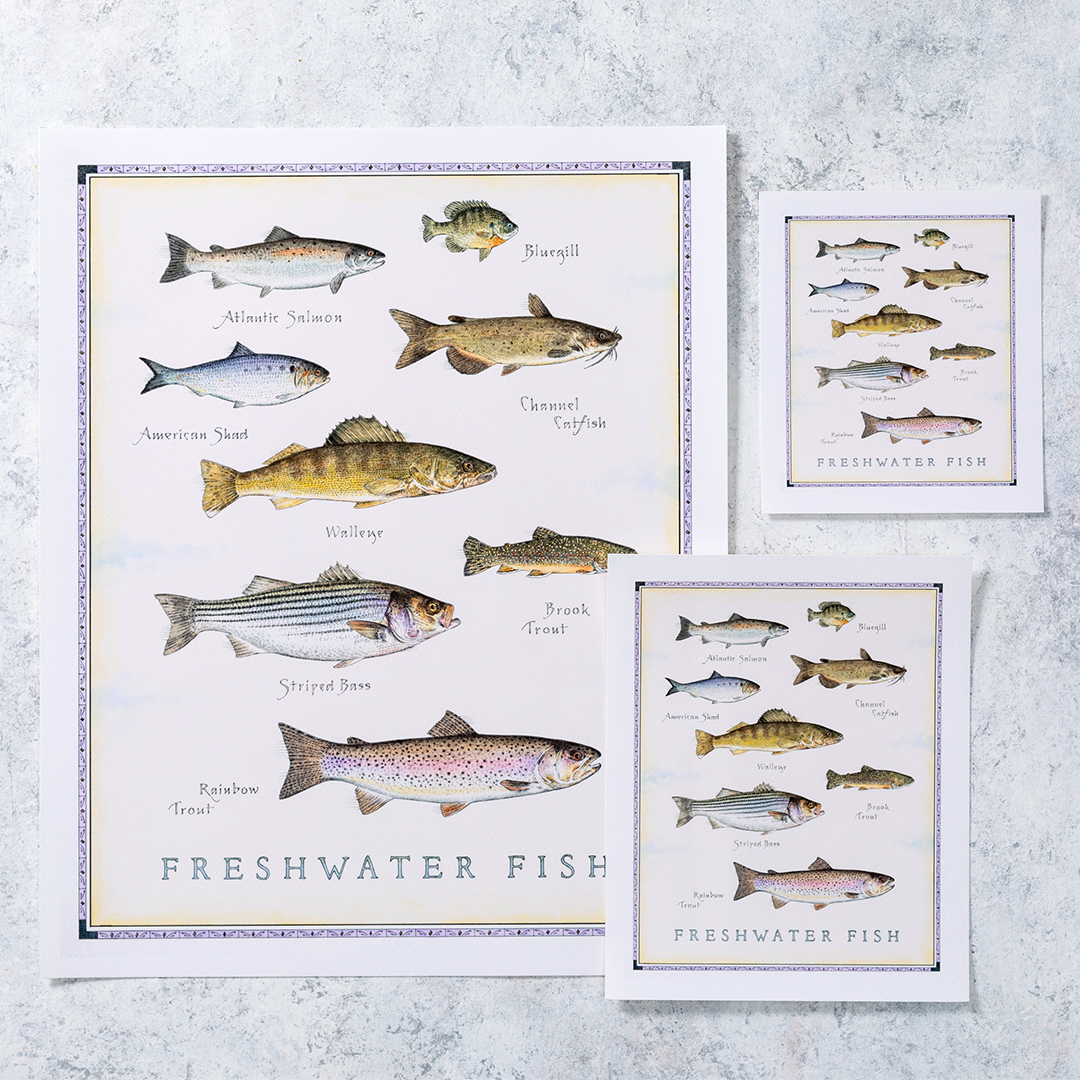 Cook's Illustrated Unframed Print: Freshwater Fish