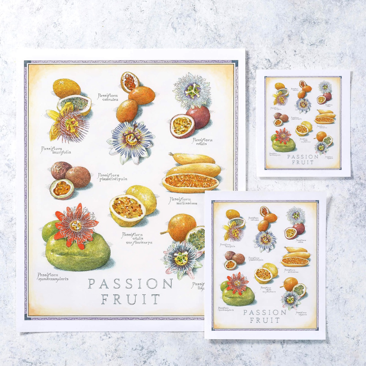 Cook's Illustrated Unframed Print: Passion Fruit